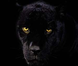 feketepárduc