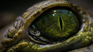 crocodile-eye-17361
